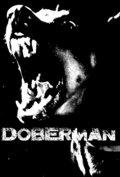 Doberman image