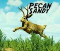 Pecan Sandy image