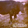 Aldine image