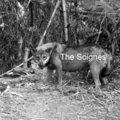 The Soignès image