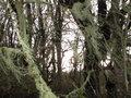 hanging moss image