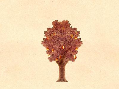The Pear Tree (medium) main photo