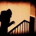 Lupins image