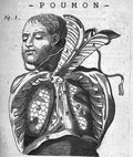 Poumon image