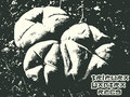 Tripura yantra records image