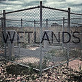 The Wetlands image