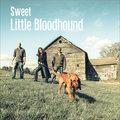 Sweet Little Bloodhound image