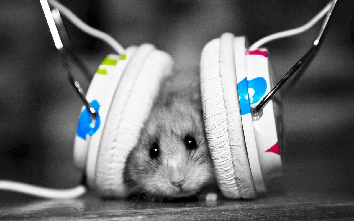 Mr Hamster Image