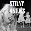 Stray Antics image