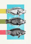 FishFantasy image