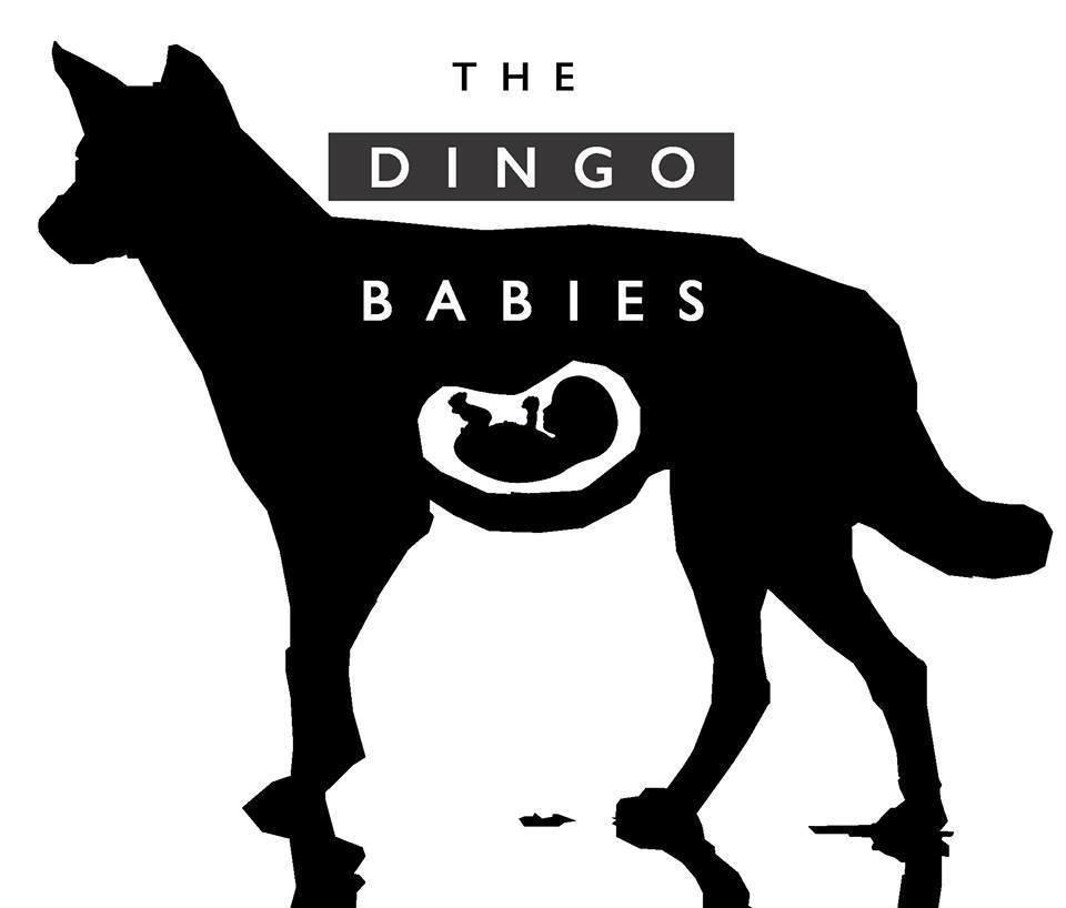 the dingo babies