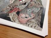 Limited edition Caitlin Hackett 'Huxwhukw' print photo