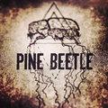 Pine Beetle image