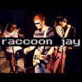 Raccoon Jay image