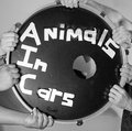 Animals in Cars image