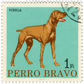 Perro Bravo image
