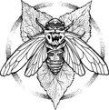 Locust Amber image
