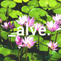 alve.beats image