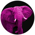 The Pink Elephant image