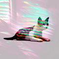 Whisker Whispers image