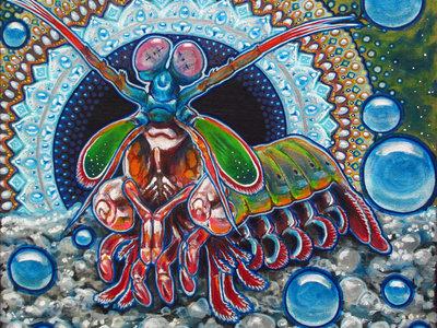 King Prawn (Mantis Shrimp) main photo