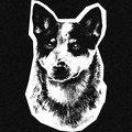 Cattledog image