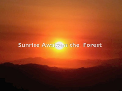 """The beautiful forest, mountains and skies of Idyllwild, with the 6 music tracks from the CD, """"Music from the Heart of the Forest"""" ~ free shipping (US only) International shipping available main photo"""