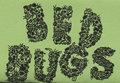 BedBugs image