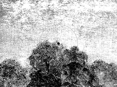 "12"" vinyl - PHORMA001 - Norm Talley - Deep Consciousness (incl. Ness Remix) main photo"