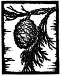 Sequoia image