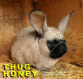 Thug Honey image