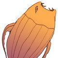 Extrafish image