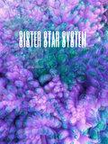 Sister. Star. System. image