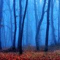 Blue Forest image