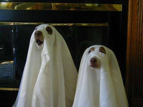 Way of the nin dog ep ghost dogs ghost dogs image publicscrutiny Images
