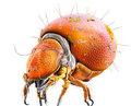 Aethereal Arthropod image