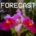The Forecast image