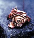 Gypsy Rose image