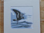 Mounted album artwork print - storm petrel photo