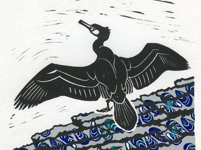 Mounted album artwork print - cormorant main photo