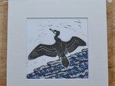 Mounted album artwork print - cormorant photo