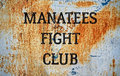 Manatees Fight Club image