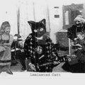 Laminated Cat image