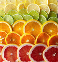 Citrus Sounds image