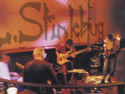 Merveilleux L. Stinkbug