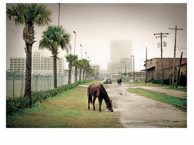 "Signed ""Galveston"" Print main photo"