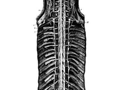 t-shirt spinal main photo