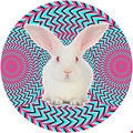 White Rabbit Collective image