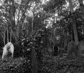 Cementerios image