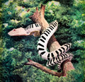 Ezra Zebra image
